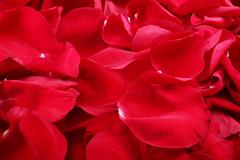 Macro shot of background of red rose petals Stock Photos