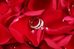 Macro shot of set of wedding rings in red rose petals Stock Photos