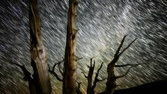 4K Startrails Forest 01 Timelapse Astrophotography4K - stock footage