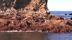 A seal rookery in Channel Islands National Park as seen from a boat just Stock Footage