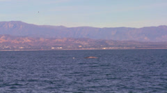 A whale dives and splashes with its tail off the coast of Santa Barbara, Stock Footage