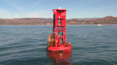 Harbor seals rest on a buoy off the coast of Santa Barbara, California. Stock Footage