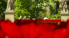 Red tulips - rack focus - stock footage