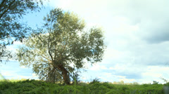 Lonely tree - meadow - grassland Stock Footage