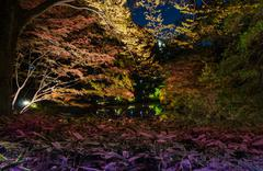 seasonal illuminations at rikugien garden - stock photo
