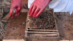 Working bee hive frames 02 Stock Footage
