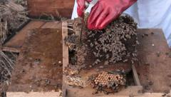 Working bee hive frames Stock Footage