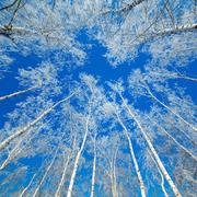 Trees covered with snow against the sky Stock Photos