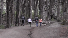 People Walking in the Wood Stock Footage