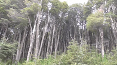 Panoramic Wood full of Trees - stock footage