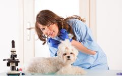 Woman vet with a small dog Stock Photos