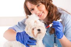 woman vet holding a dog - stock photo