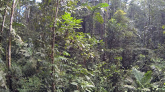 Flying up from the rainforest understory  Stock Footage
