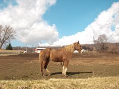 Farm horse Stock Photos