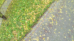 Wind blows fallen yellow leaves on paved path in park Stock Footage