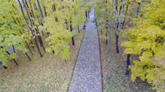 People walk by park alley among trees with yellow foliage Stock Footage