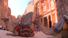 Camels sit in front of the Treasury building in the ancient Nabatean ruins of Stock Footage