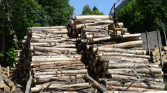 Cranes lift load stack of timber logs at lumber processing mill Stock Footage