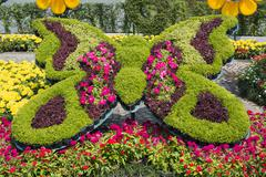 bunch of colorful flowers in butterfly shape - stock photo