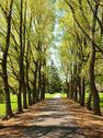 Stock Photo of tree lined walkway