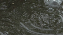 Raindrops falling into a puddle Stock Footage