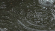 Stock Video Footage of raindrops falling into a puddle