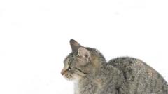 Tabby kitten in snow Stock Footage