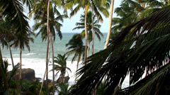 Palm trees on the coast of the Indian Ocean. Sri Lanka. Stock Footage