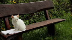 Cute kitty sitting on bench - stock footage