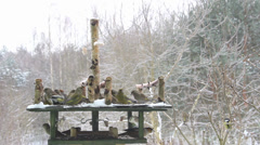Bird Feeder at winter time. Tits, greenfinches and hawfinches eating together. Stock Footage