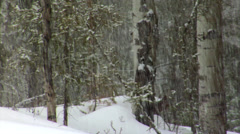 Snowing Forest Floor Stock Footage