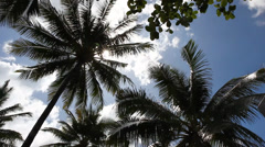 Palm tree, looking up into sun - stock footage