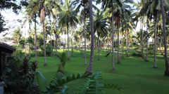 Khao Lak Palm Tree garden - stock footage
