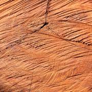 Surface wood log texture background Stock Photos
