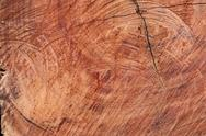 Stock Photo of surface wood log texture background