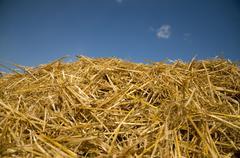 Straw heap - stock photo