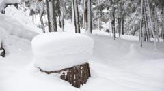 Snow mushroom Stock Footage