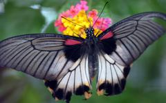 Over Butterfly - stock photo