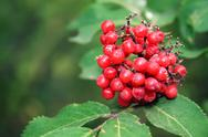 Stock Photo of red berries