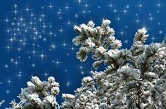 Snow covered fir branch against blue sky - stock illustration