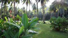 Khao Lak Palm Garden - stock footage
