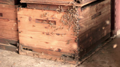 Bees entering hive side Stock Footage