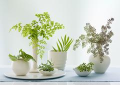 A group of containers, jugs and vases with a variety of green leaves  Stock Photos