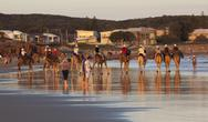 Stock Photo of camels on stockton beach. port stephens. anna bay. australia.