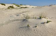 Stock Photo of sand dunes landscape. fingal bay. port stephens. australia