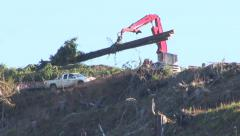 Crane Moving Large Trees Stock Footage