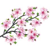Japanese tree sakura, cherry blossom isolated Stock Illustration