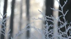 White frost on twigs, frozen woods in wintertime Stock Footage