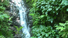 Small Waterfall in a lush woods - HD1080i Stock Footage