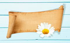 Daisy banner memo Stock Photos